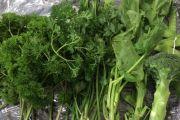 Pemeriksaan Karantina untuk Pemasukan Produk Hortikultura
