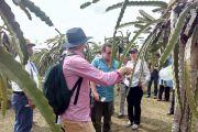 Australia menjajaki kerjasama ekspor Buah Naga Indonesia