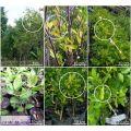 Pengawasan Karantina terhadap Citrus Exocortis Viroid (CeVD) pada Jeru...